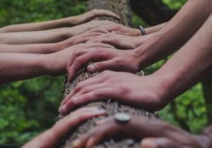 Peoples hand on a log representing organic link building